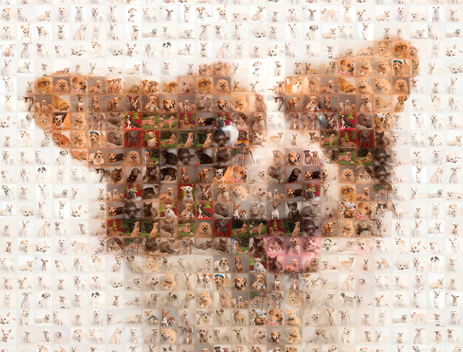 mosaic dog head photo